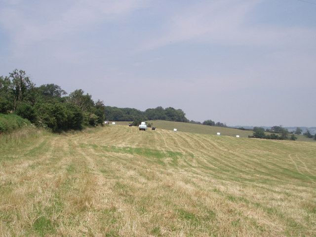 Silage fields