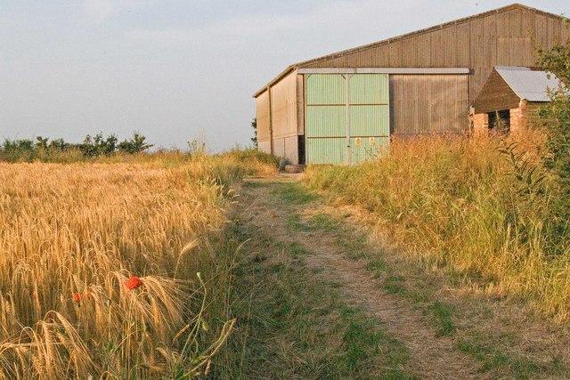 Barn, Bridleway and Ripening Barley