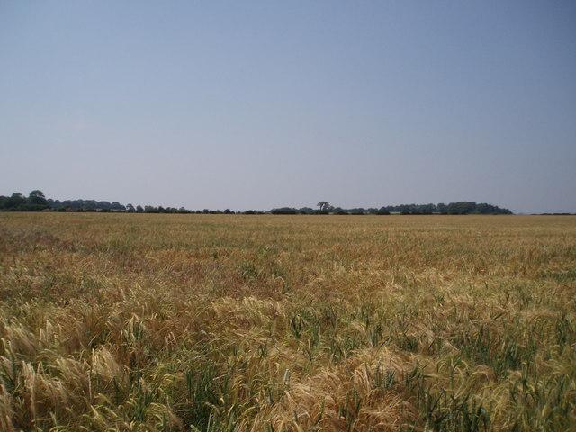 Marksbury Plain