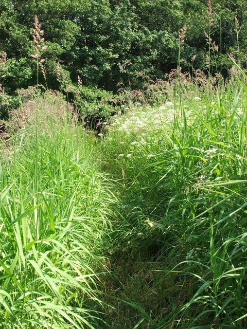 Path alongside the River Aln