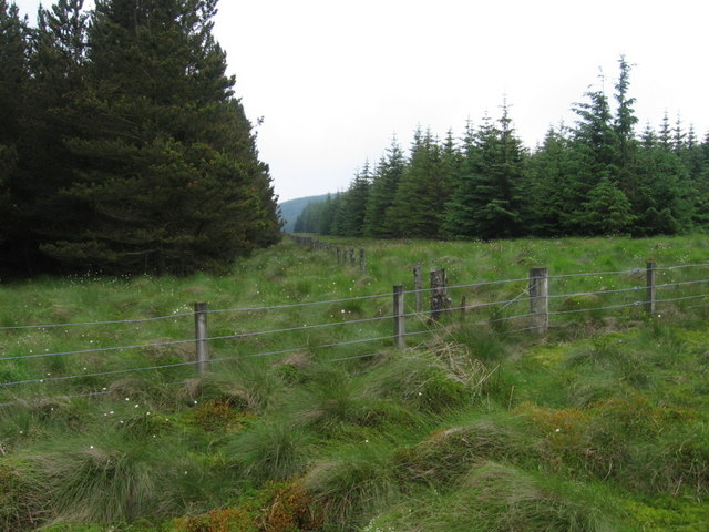Fence junction and firebreak