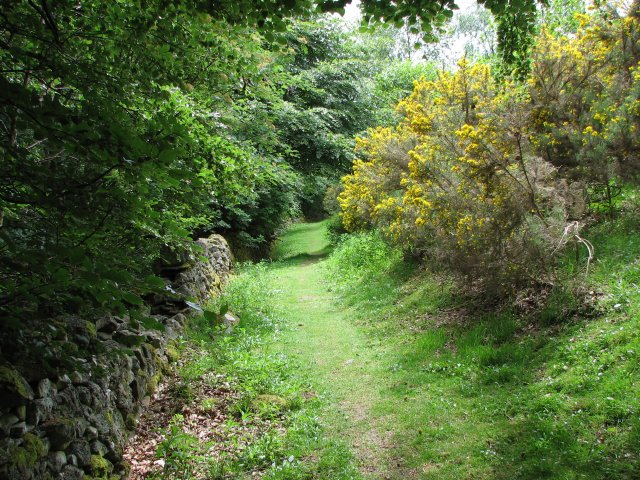St Ronan's Wood