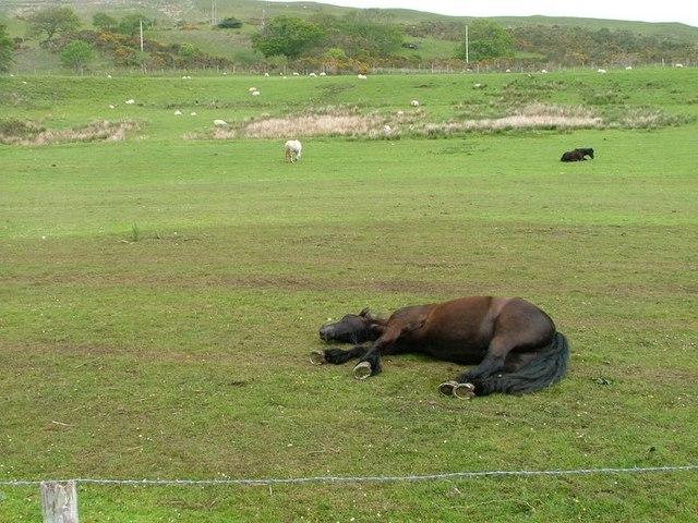 Paddock, Killiechronan Farm