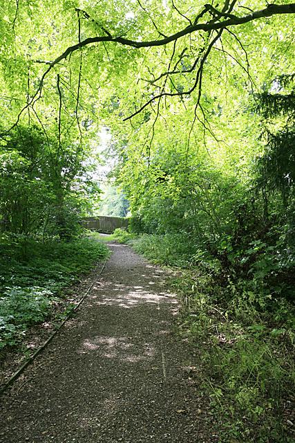 Woodland north of Bouverie Avenue, Harnham, Salisbury