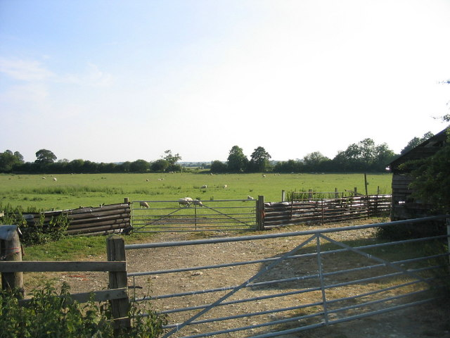 Grazing sheep and sheep-fold - Olney