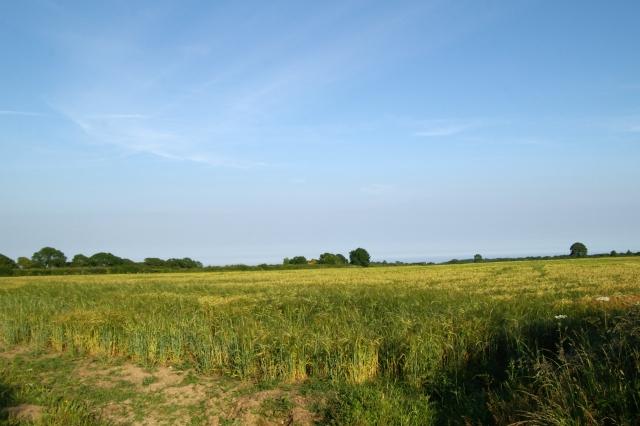 Field, Beechtree Lane, Branscombe Cross