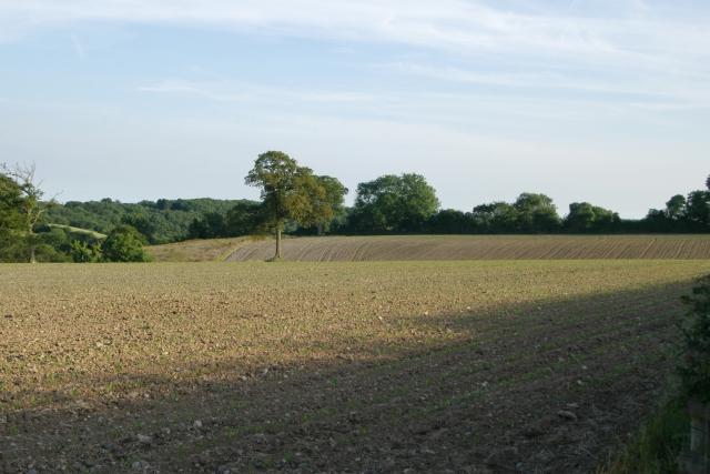 Fields, Chelson Lane, Salcombe Regis