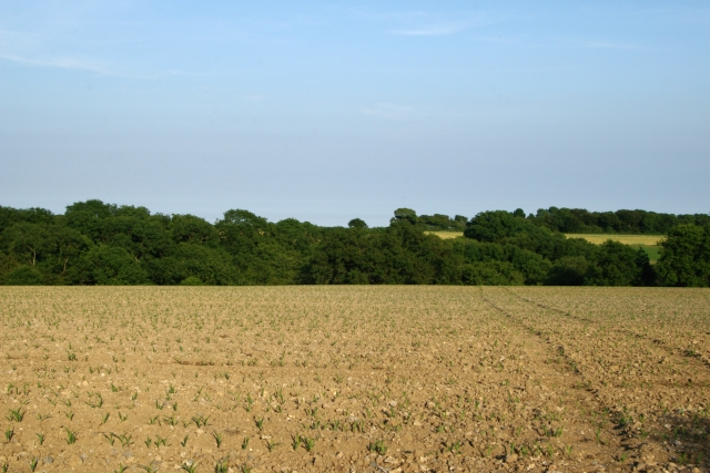 Field, Chelson Lane, Salcombe Regis