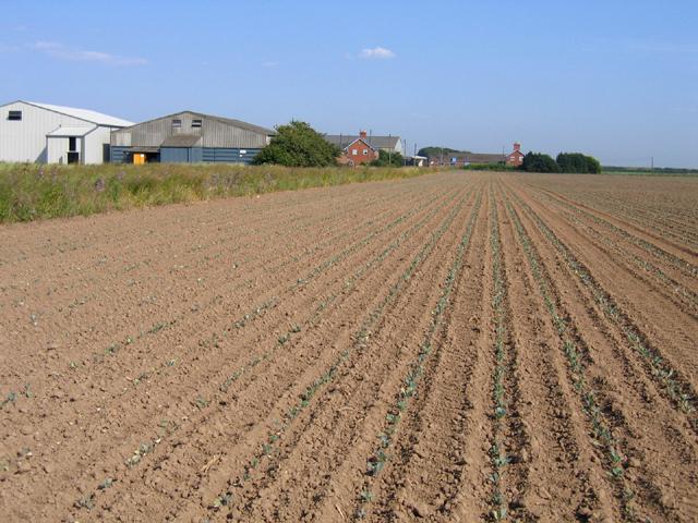 College Farm, Kirton/Frampton Marsh, Lincs