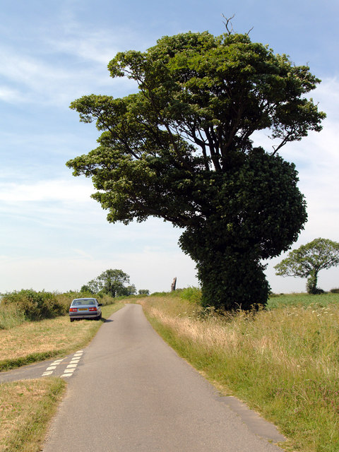 Tree on the Middlegate Road