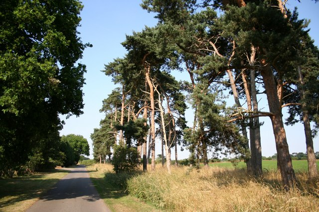 New Lane