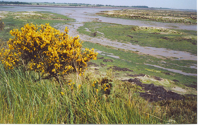 Saltmarsh near Gore Saltings.
