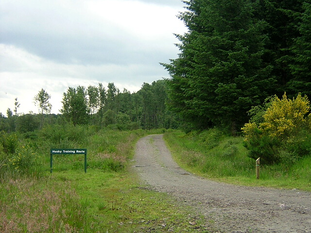 Husky Training Route in Loch Ard Forest