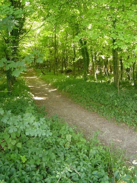 Hay Down bridleway, Tunworth