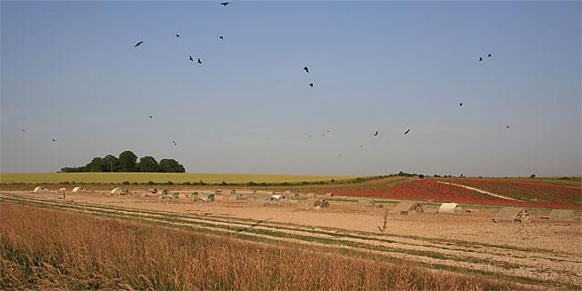 Pig farm and poppy fields in vicinity of Gutteridge Farm, East Winterslow