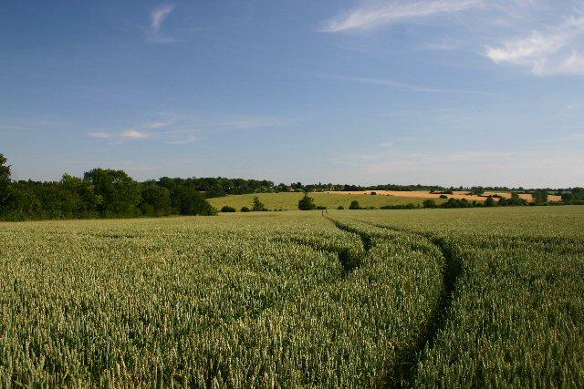 Fields by Brands Lane