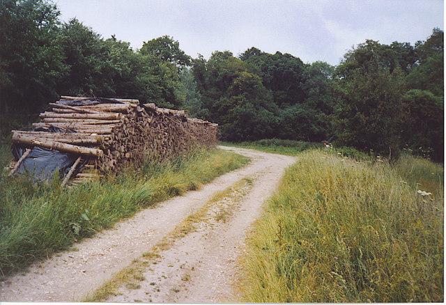 Logging on the West Dean Estate.