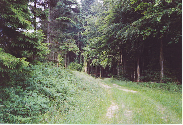 Bridleway Through Stubbs Copse.