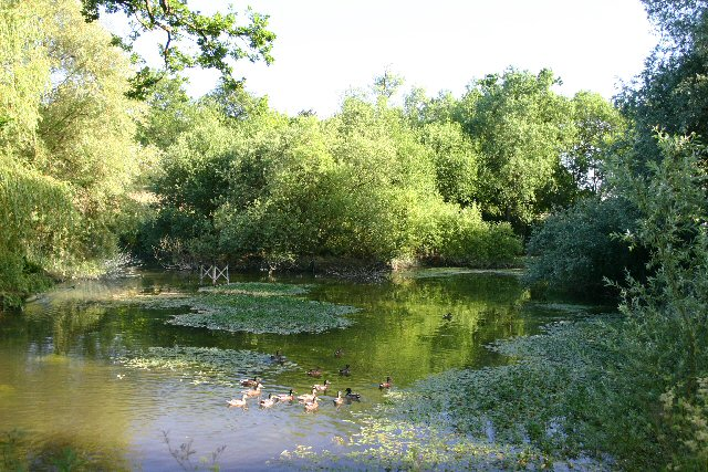 Duckpond at Coldham Hall