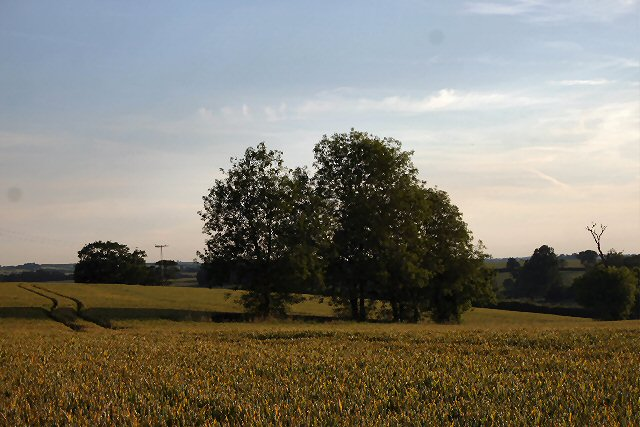 Fields near Hawkedon Hall