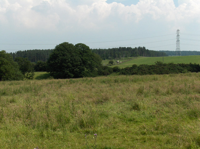 Pylon, wood and farmland, near Cotehill