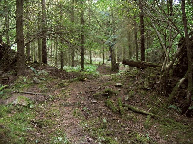 Trail through break in forest wall near Gelli Aur
