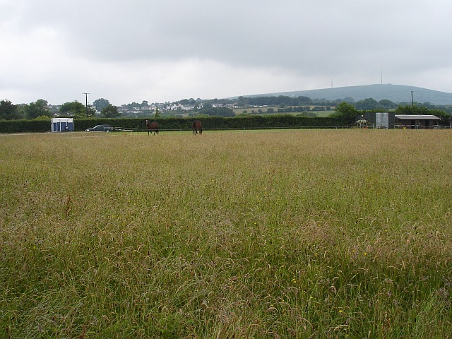 Pasture north of Golberdon Road