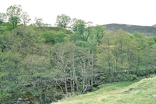 Sean-bhaile Wood
