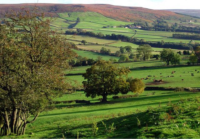 The Fields of Bilsdale