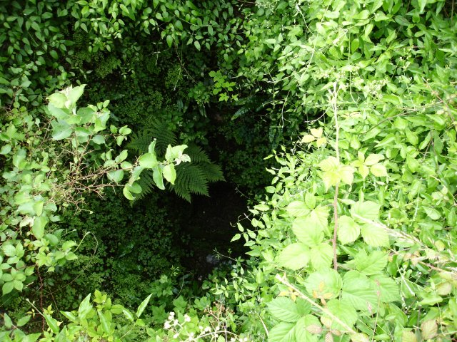 Verdant growth in the lime kiln
