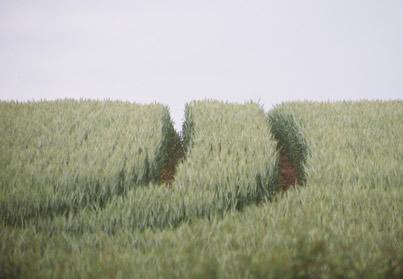 Stourton Field