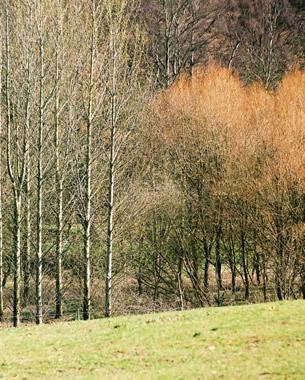 Trees bordering the canal near Flatheridge Bridge