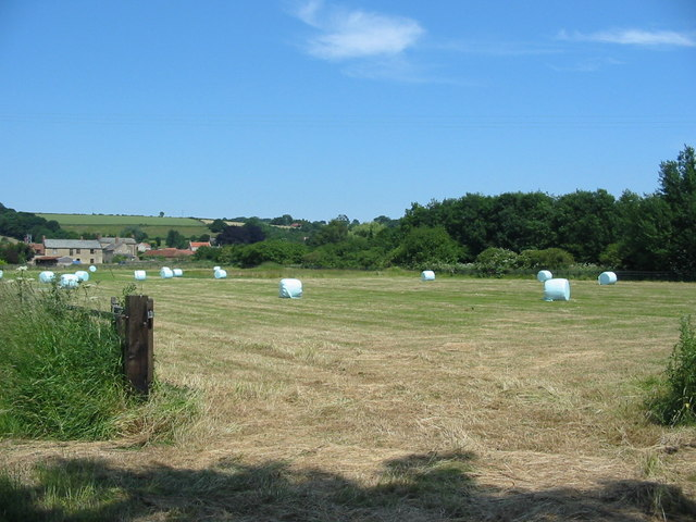 Big baled silage awaiting collection near Snainton