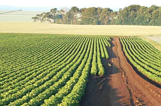 Fields in the early light