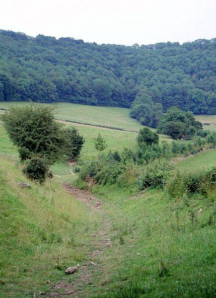 Bridleway and Coaley wood