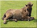 NY3534 : Fell pony by Andrew Smith