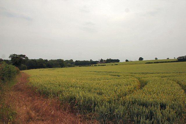 Fields at Shimpling
