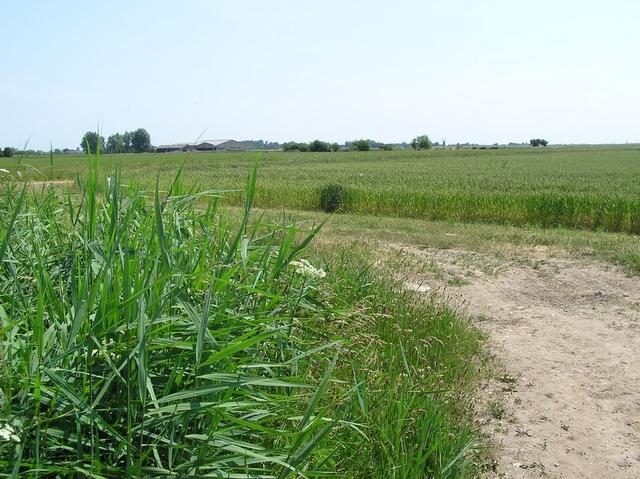 Farmland, near Ludham