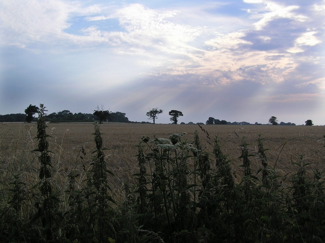 Farmland, Ludham
