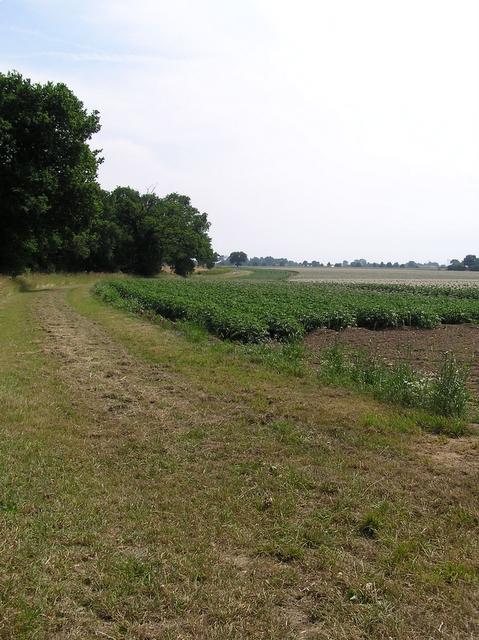 Farmland, Catfield