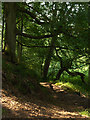 NY4449 : Wreay Woods by Andrew Smith
