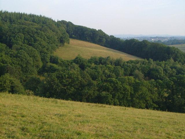 Oldridge Wood