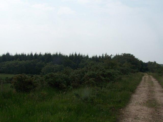 Bute, West Island Way, Cnocnicoll Wood