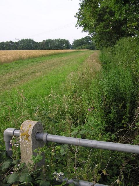 Brook, near Catfield