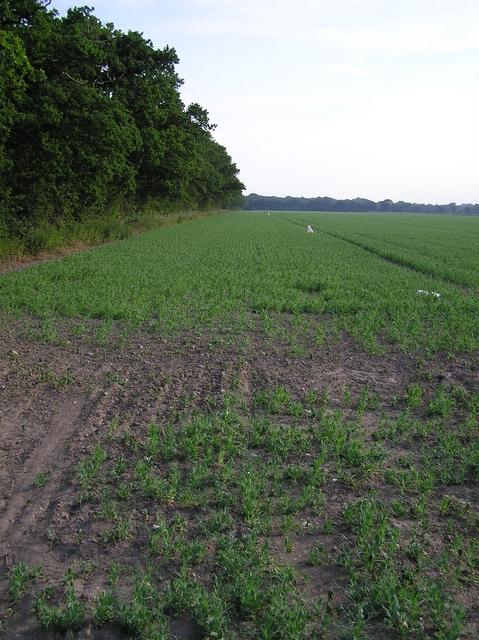 Farmland, near Hickling