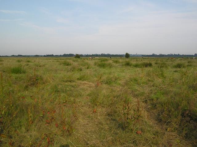 Grazing marsh, towards Martham