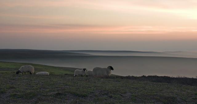 Misty Sunset on Danby moor