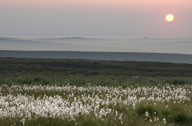 Cotton Grass and Big view