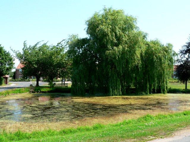 Skipwith Village Pond