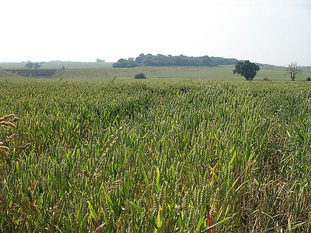 Farmland by Gore Lane